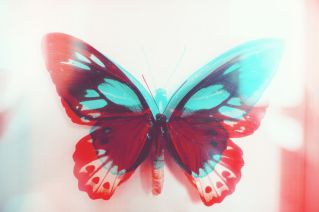 Colorful Butterfly. Double Exposure.